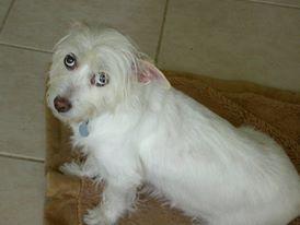 dog-lily
