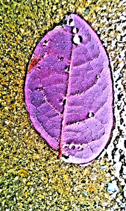 Leaf_net.jpg